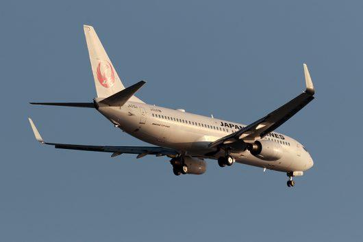 JL/JAL/日本航空 JL4602 B737-800 JA313J