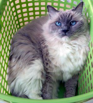 お気に入りの洗濯カゴで