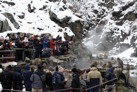 サルより観光客のほうが多いスノーモンキーパーク