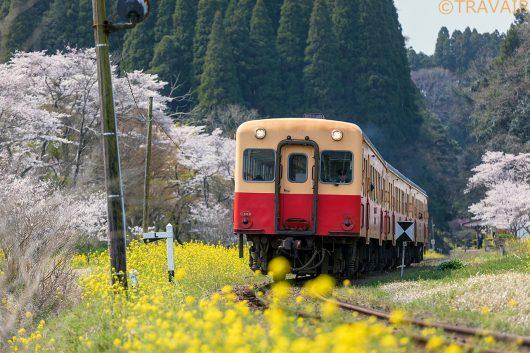 小湊鐵道と菜の花