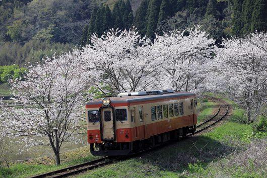 いすみ鉄道と桜