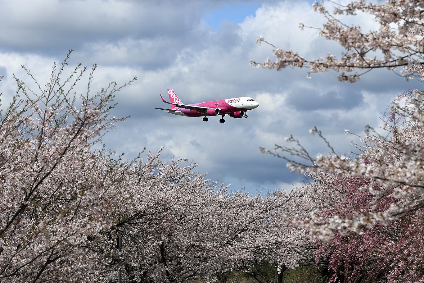 MM/APJ/ピーチアビエーション A320